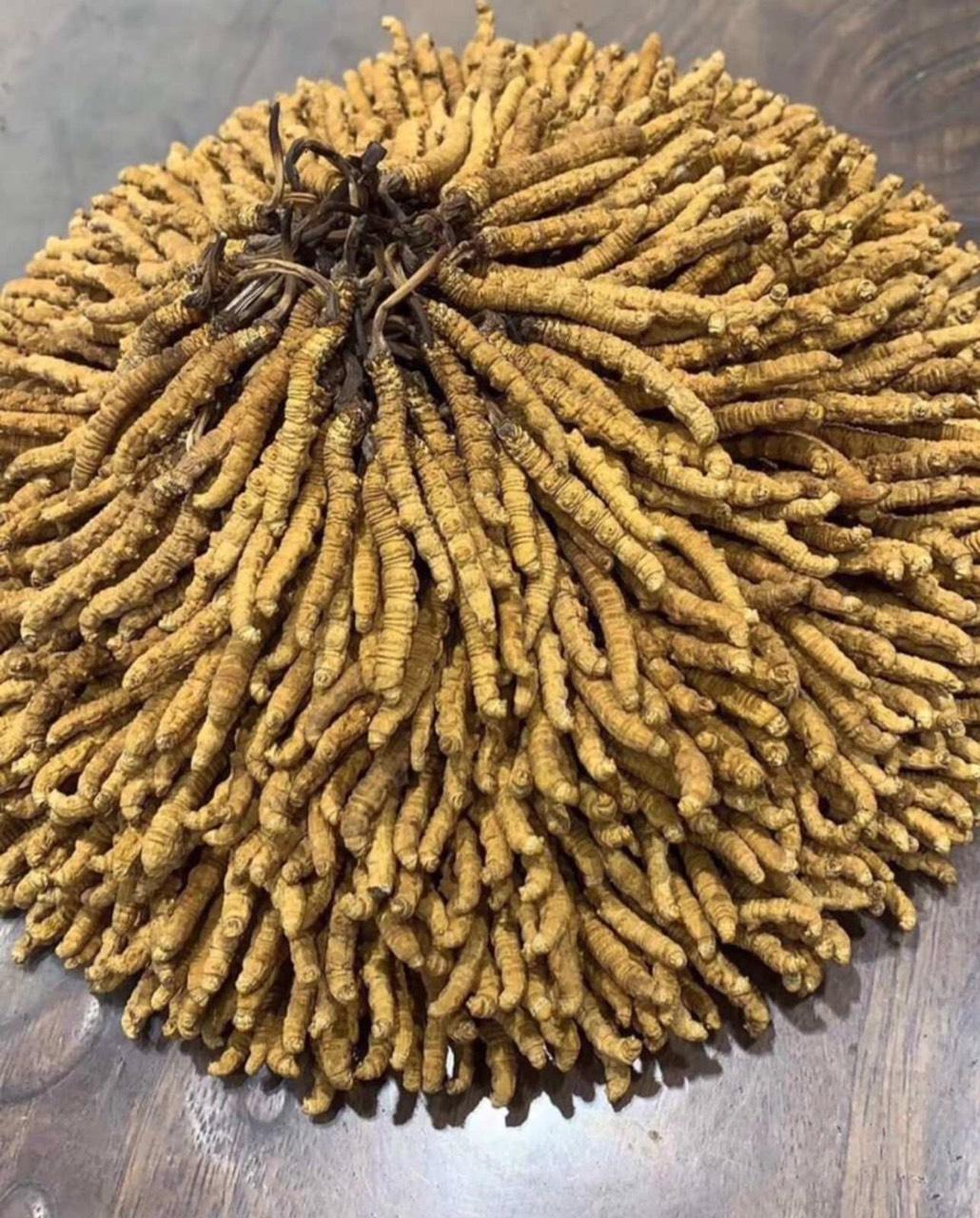 Đông trùng hạ thảo ngâm với mật ong và công thức ngâm